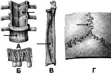 a csípőízület ligamentuma károsodása